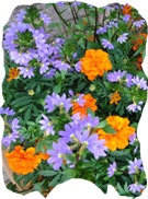 Purple & Orange Flowers